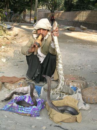 snakesofdelhi